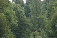 promenade-randonee-chemin-nohant-vic-32