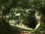 Chemin de Vic à Nohant